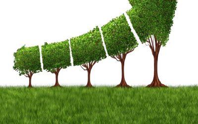 4 Pillars of Organic Growth